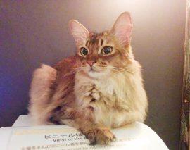 猫カフェMochaさんに行ってきました